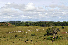 Wildlife Conservation Research -