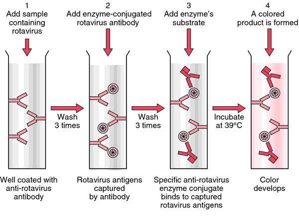 define enzyme immunoassay
