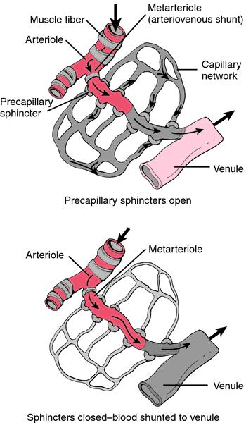 Bilderesultat for precapillary shunt