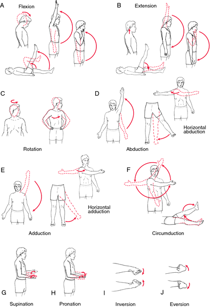 Passive exercise | definition of passive exercise by Medical dictionary
