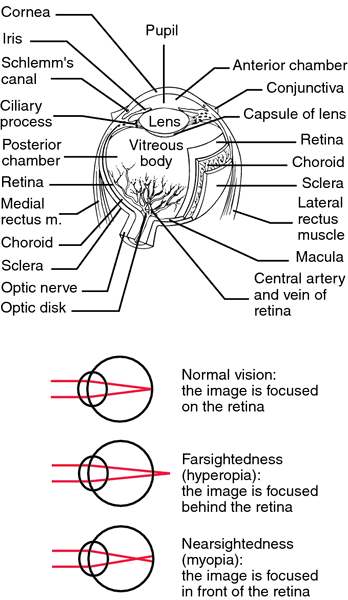 Tunnel vision   definition of tunnel vision by Medical ...